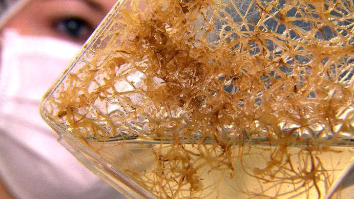 Nützlicher Pilz - Mykorrhiza-Pilze versorgen Pflanzen mit Phosphor