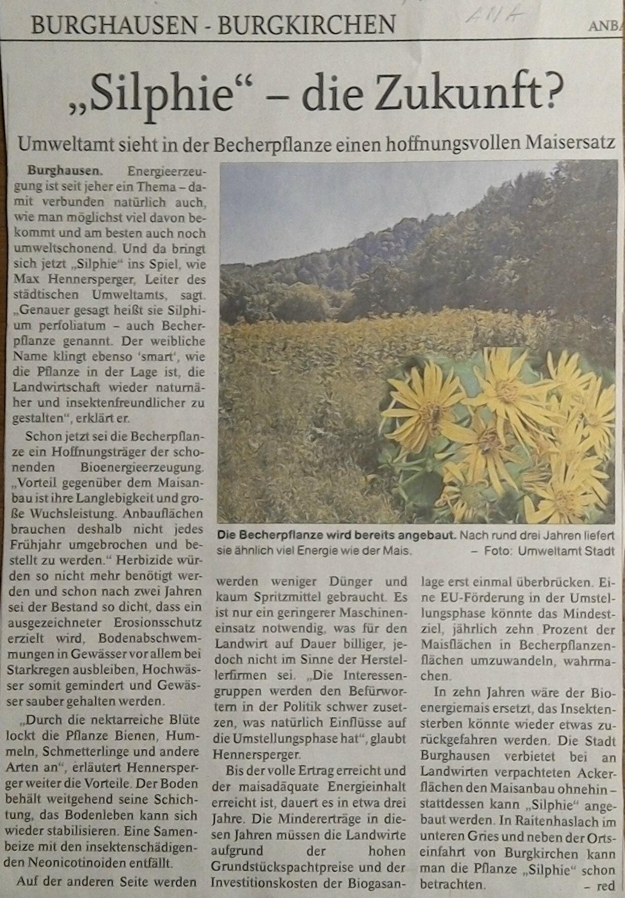 Silphie - Energiepflanze als Ersatz für den Mais in Burghausen