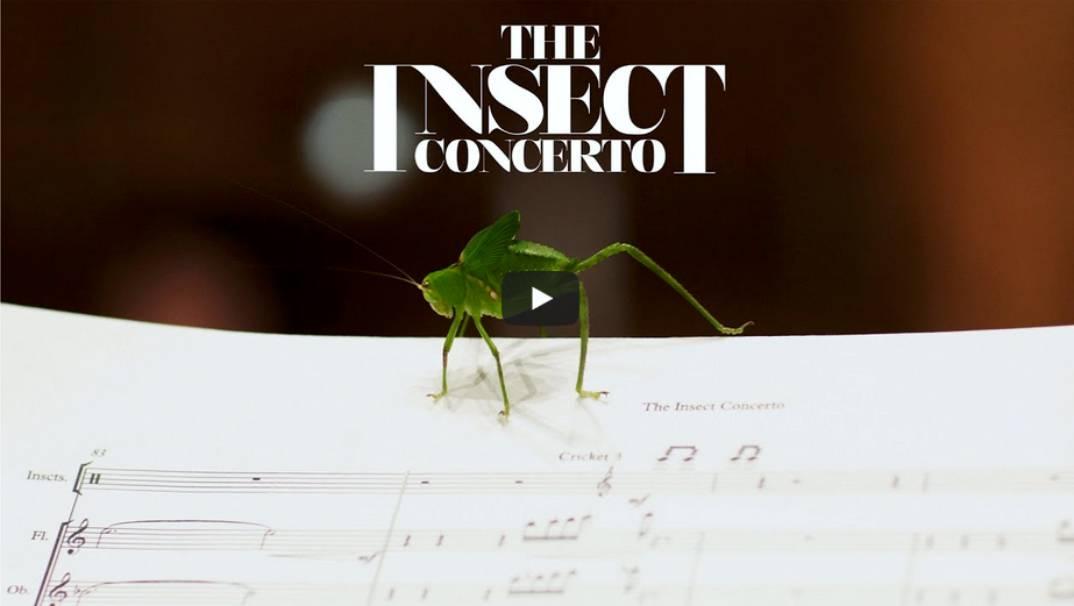 Mit Musik gegen das Insektensterben