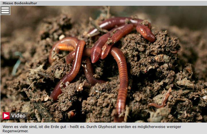 Regenwürmer in Gefahr